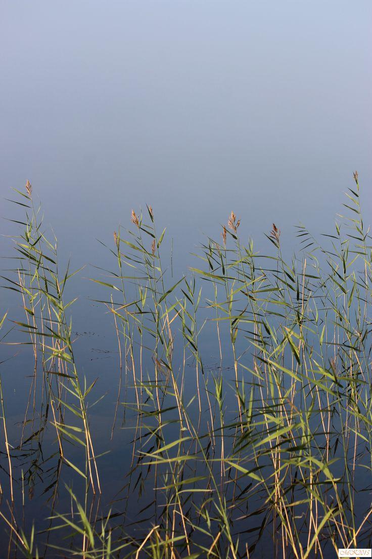 #foto #lake #deadcalm #smoothasglass #morning #mist #finland #valokuvaus #järvi #aamu #peilityyni #sumu #suomi