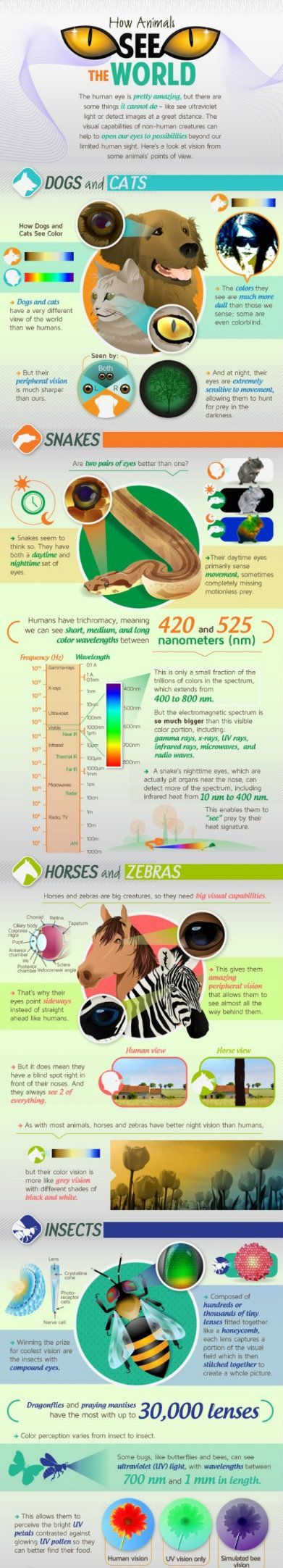 How-Animals-See-the-World
