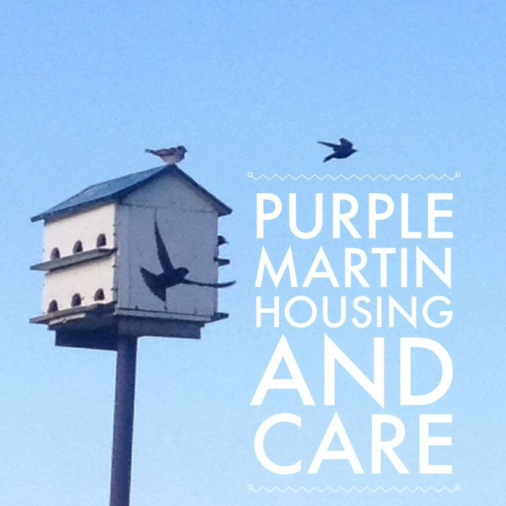 Purple martin houses as Mother's Day gifts! I say YES!