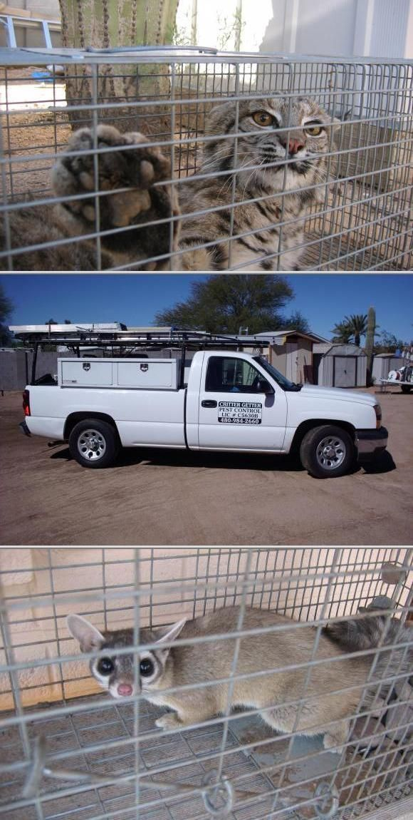 Critter Getter Pest Wildlife Control Protects People As Well Their Homes And Properties From Pests They Pr Service