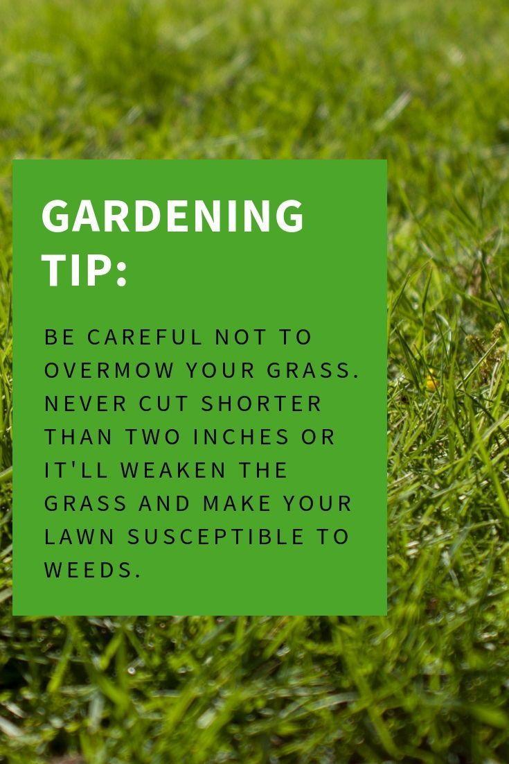 Pin On Modern Gardens Group Board Best Modern Garden Ideas Urban Garden Modern Garden Design Best Urban Garden Ideas Urban Garden Design Urban Garden Supplies Homesteading