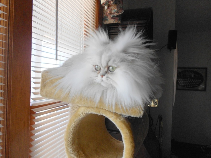 """It's hard to have a bad hair day when you're fabulous…"" Photo by ©Sweet Purrfections http://sweetpurrfections.blogspot.com.br/    Photo by ©Sweet Purrfections"