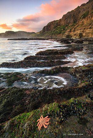 Maori Bay, West Coast Auckland.