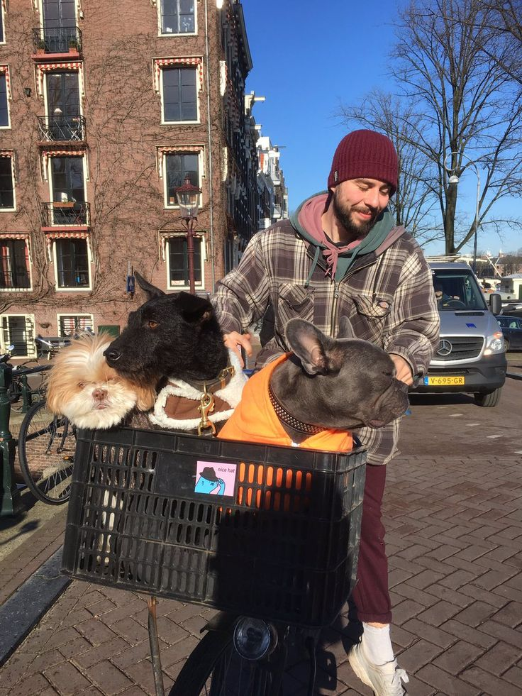 """""""Who let the dogs out?"""" #Amstel 13-02-2018"""