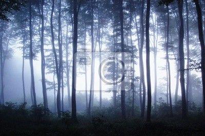 ber 1000 Ideen Zu Fototapete Wald Auf Pinterest Vlies