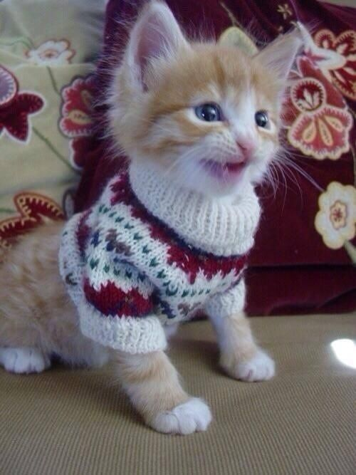 This kitten is so happy to be able to wear his new sweater… | 27 Tiny Animals That Will Warm Your Heart Today