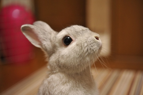 dailybunny.org - how did I not find this site before?!