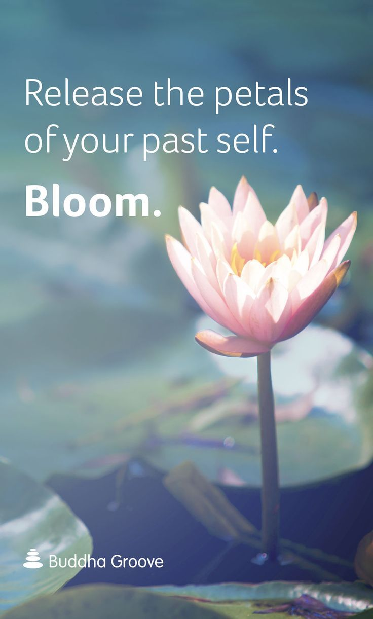Inspiration from the lotus flower mags inspirational quotes inspiration from the lotus flower release the petals of your past self bloom izmirmasajfo