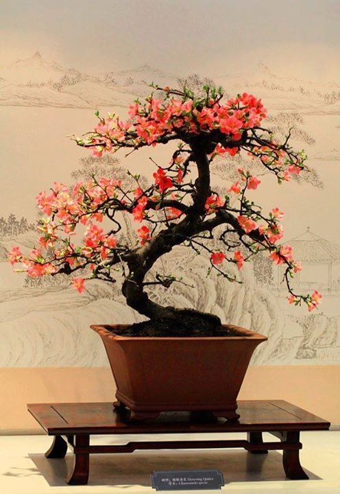 642 best bonsai in bloom images on pinterest bonsai