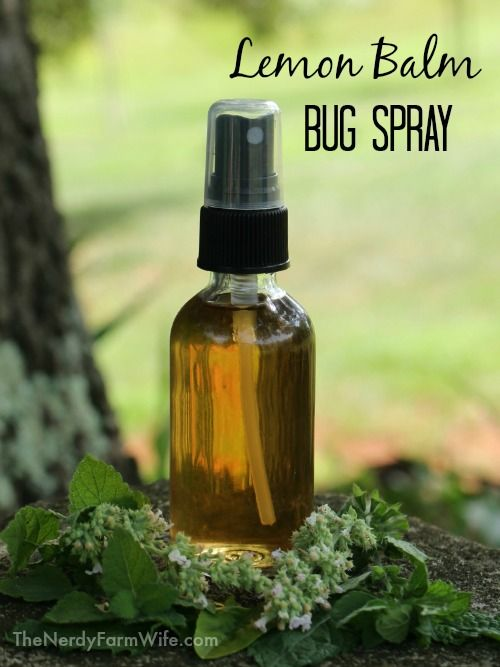 Lemon Balm Bug Spray. A stacking function for lemon balm! And basil, mint, and catnip.