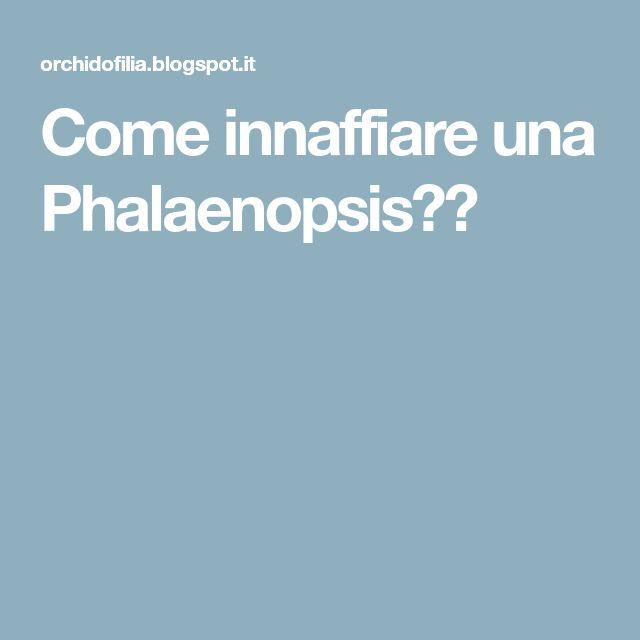Come innaffiare una Phalaenopsis??