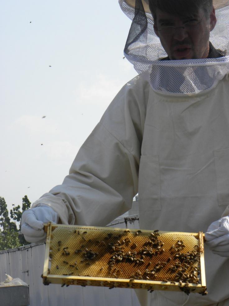 City Bees in Berlin