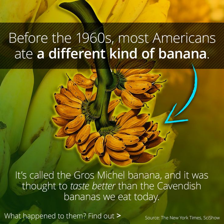 What Happened To The Gros Michel Banana? | Botany ...