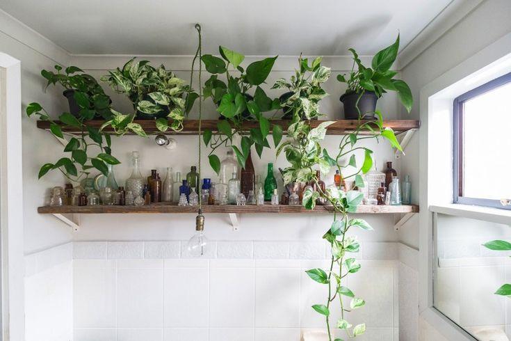 http://theplanthunter.com.au/gardens/jason-chongue/