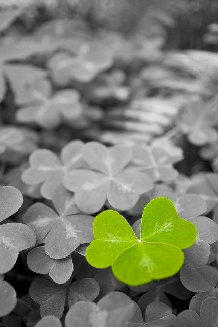 """Well....Oxalis, actually! Taken at Leach Botanical Gardens in Portland, Oregon, """"I Spy A Little Green Guy""""❤️"""