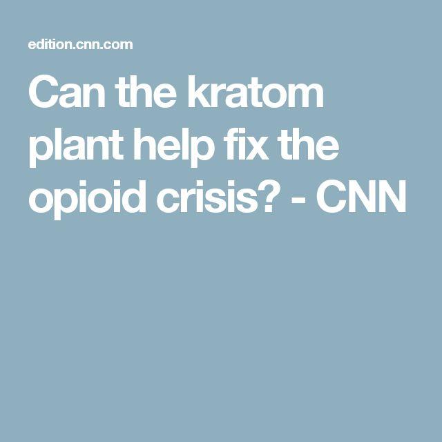 Can the kratom plant help fix the opioid crisis? - CNN