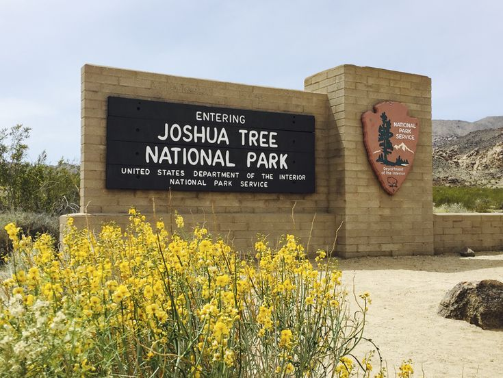 Top 10 Tips for Visiting Joshua Tree