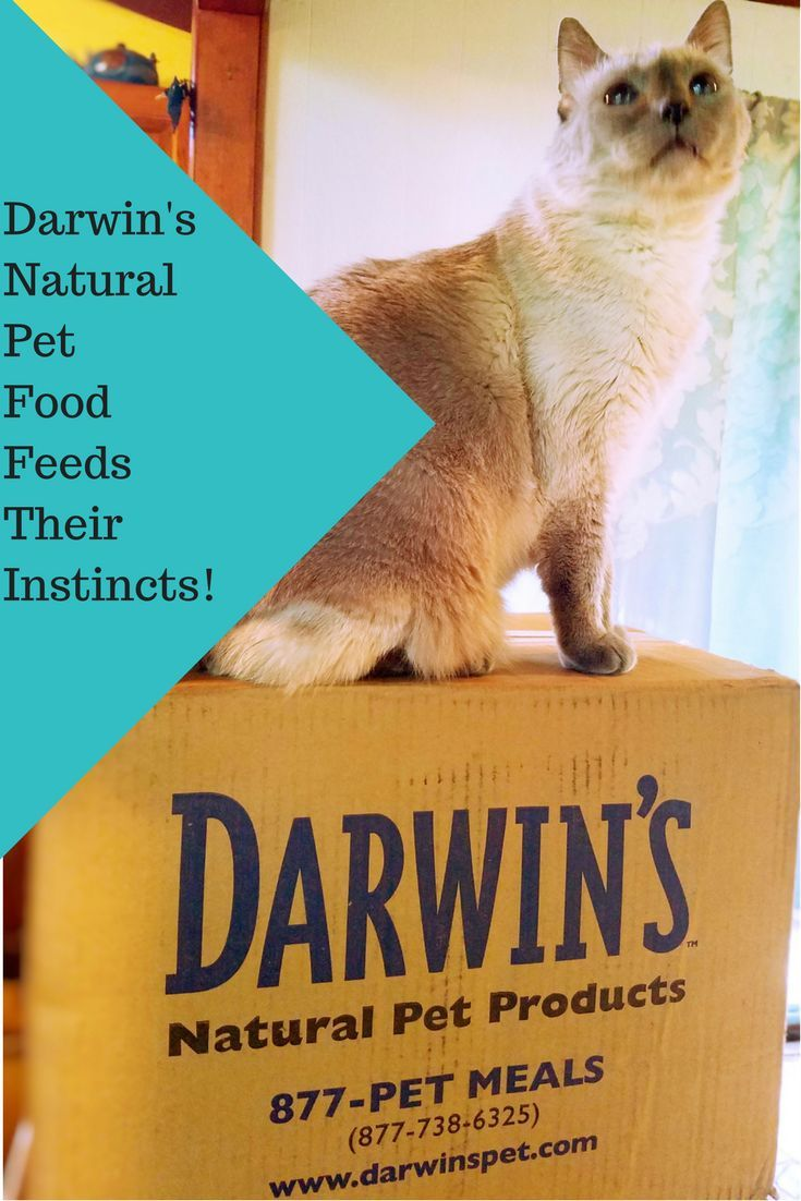 Darwin's Natural Pet Food Feed Their Instincts!    Darwin's Natural Pet Food Feeds Their Instincts! Natural Raw Pet Food 100% real meat and vegetables for your pets with convenient home delivery!    Feeding your pets a raw diet can give them increased energy, shinier coat, and relief from allergies.