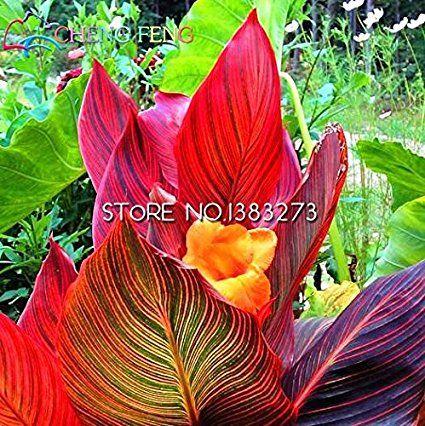 10 pezzi Canna Semi Beautiful Flower Seed Mix Indica Lily piante da giardino Bulbi Fiori all'aperto in vaso bonsai Flores. regalo a casa