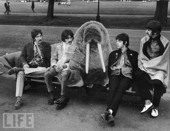 John Lennon, George Harrison, Paul McCartney, and Richard Starkey (With the Walrus-for real)