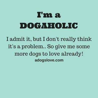 Love Dogs? You'll Love Our Facebook Page #dogquoteslove