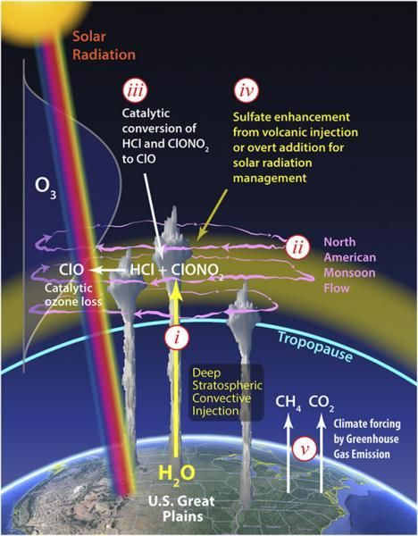 A new study out of Harvard University reveals that the protective stratospheric ozone layer above the central United States is vulnerable to erosion during the summer months from ozone-depleting chemical reactions, exposing people, livestock and crops to the harmful effects of UV...