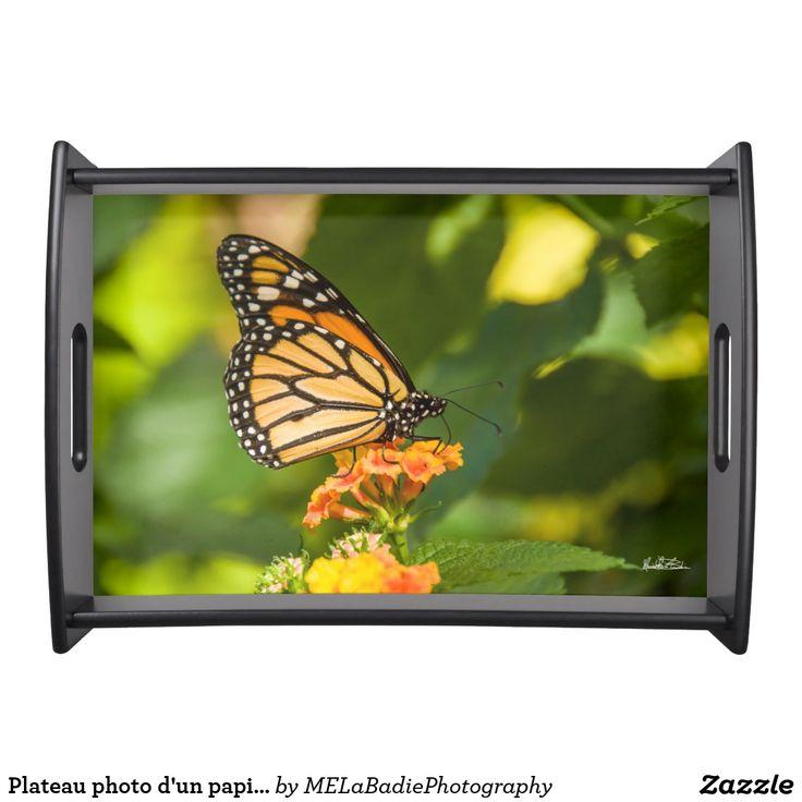 Plateau photo d'un papillon
