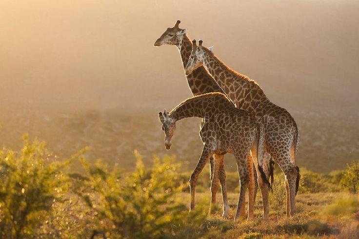 Samara Private Game Reserve, Eastern Cape