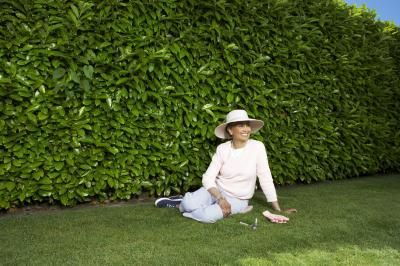 Evergreen hedges provide year-long privacy. Japanese privet hedge