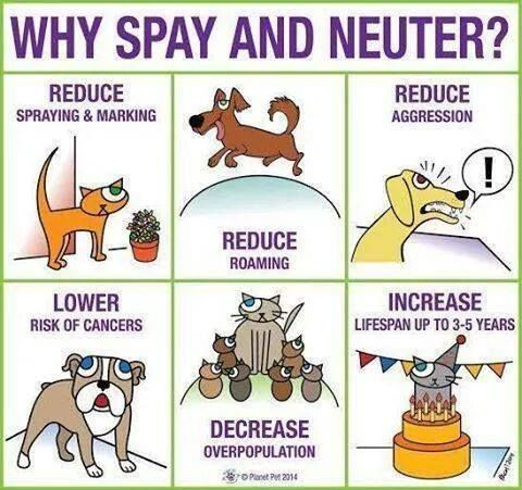 why spay and neuter your companion Why spay or neuter  resulting in a serious animal companion overpopulation crisis that causes immense suffering for its victims  more information on spay/neuter.