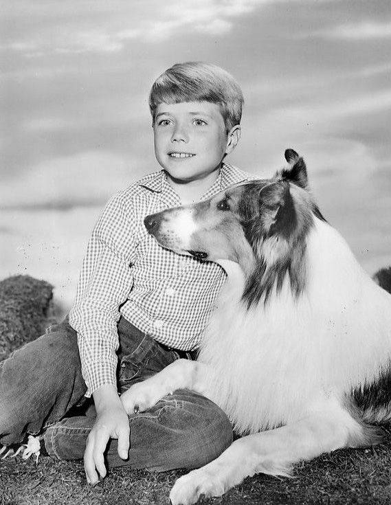 A great photo of Jon Provost as Timmy Martin with Lassie.