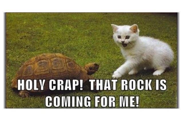Funny Cat caption