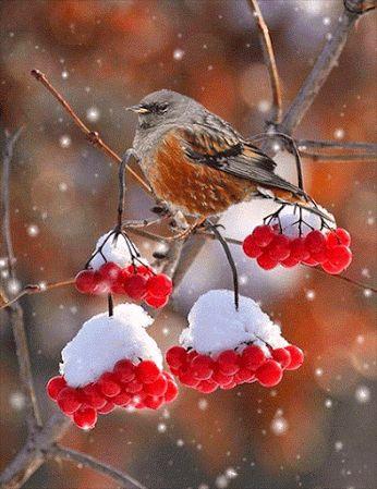 Pretty little bird on the snow