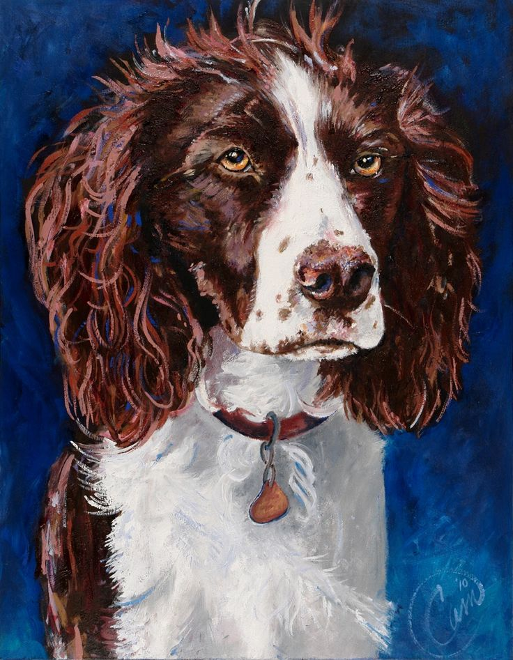 Madison, 1 year old springer who finally sat still to pose for this oil painting by Christine Morgan