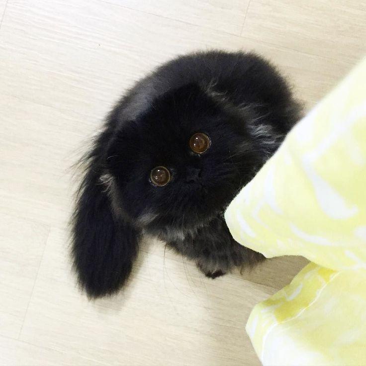 긤이 써클렌즈 저도 사고싶네요! #cat #gimo #써클렌즈꼈긤 #동공미남 by 1room1cat
