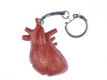 Herz Schlüsselanhänger Miniblings Anhänger Schlüsselring Organ Mensch Anatomie –…