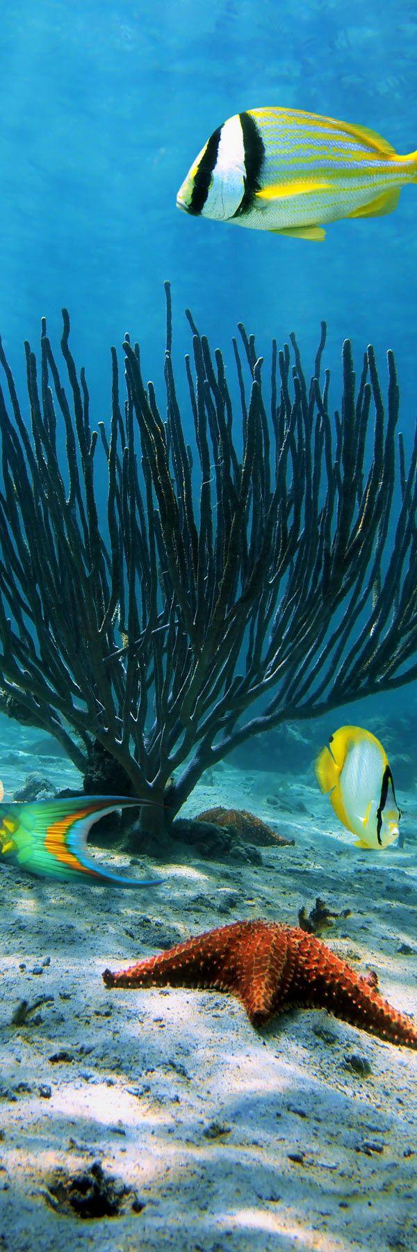 25 best underwater animals ideas on pinterest underwater life