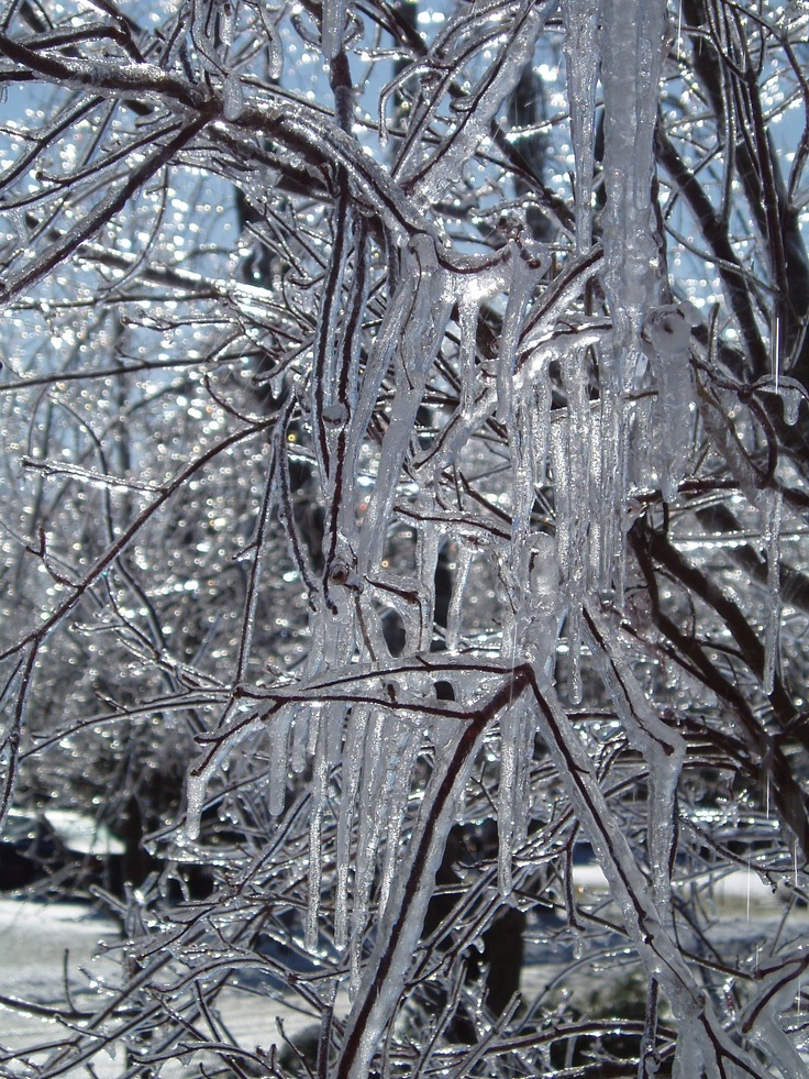 Ice Storm, Long Island: Ice Storm, Long Island