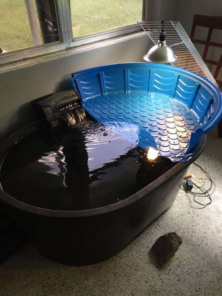 Indoor turtle pond