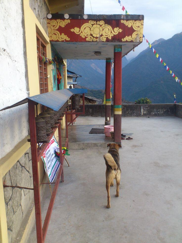 Ghandruk Niyngma Monastery #trekking #Gurung #village #Ghandruk #Ghandrung #hospital #travel