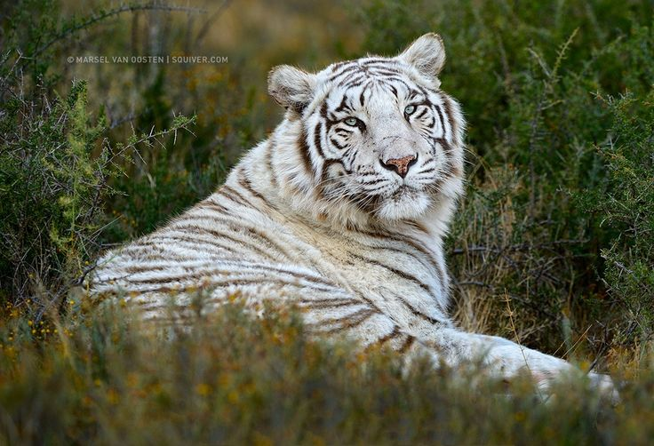 Snow White by Marsel van Oosten on 500px