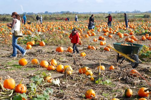 Pumpkin Patch Paradise: Westham Island Herb Farm - Vancouver Mom