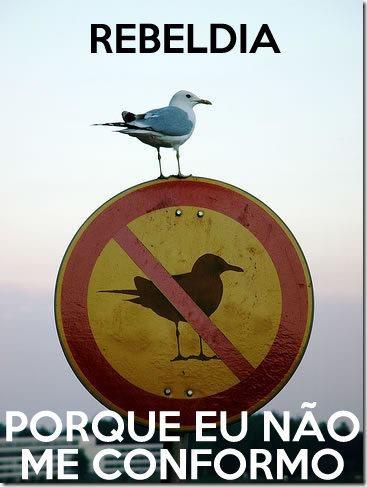Pássaro rebelde...