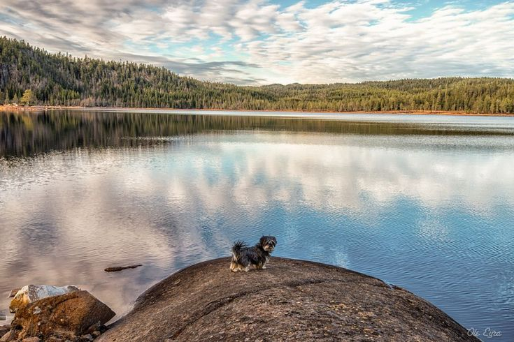 Little dog - Big lake by Ole Morten Eyra