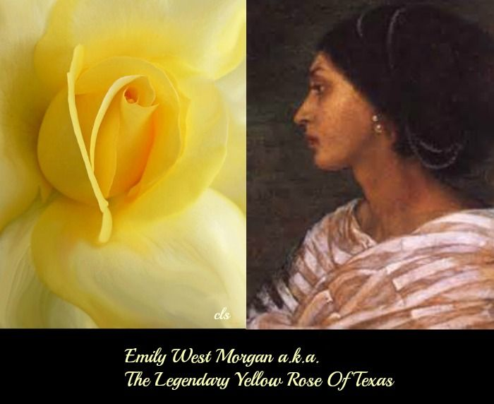 Emily West Morgan A K A Quot The Yellow Rose Of Texas Quot Was