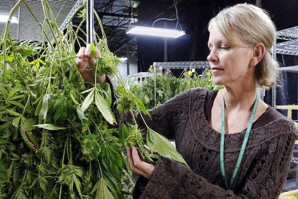 The Most Influential Women in The Cannabis Industry