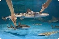Newport Aquarium - Newport, KY, USA