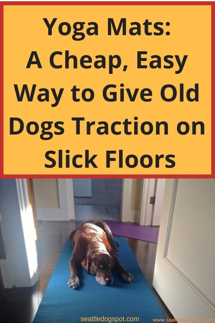Yoga Mats Are A Easy Way To Give Old Dogs Traction On Slick Floors Seattle Do Senior Care Living With