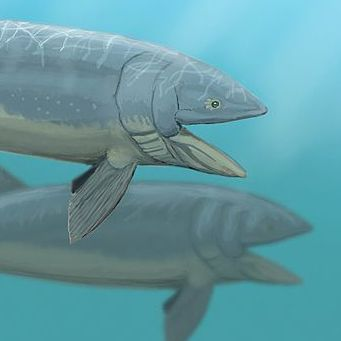 53 best images about ancient fish on pinterest frilled for Longest living fish
