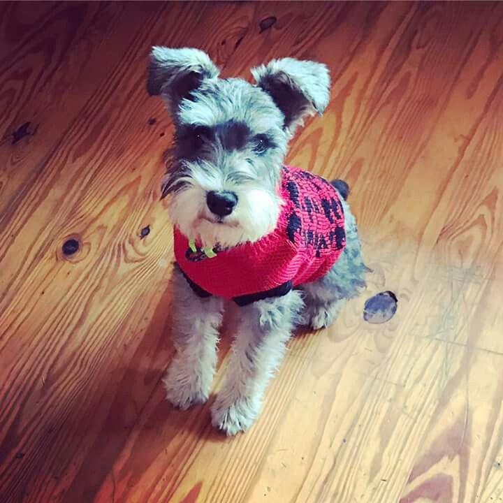 Tucker is too cute!